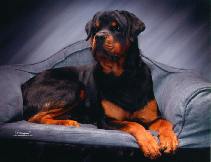 Bean the Rottweiler