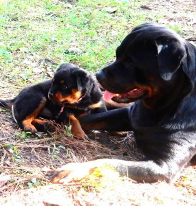 B-Naturals momma and puppy