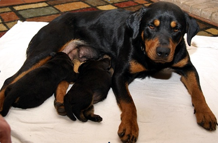mother_puppies2
