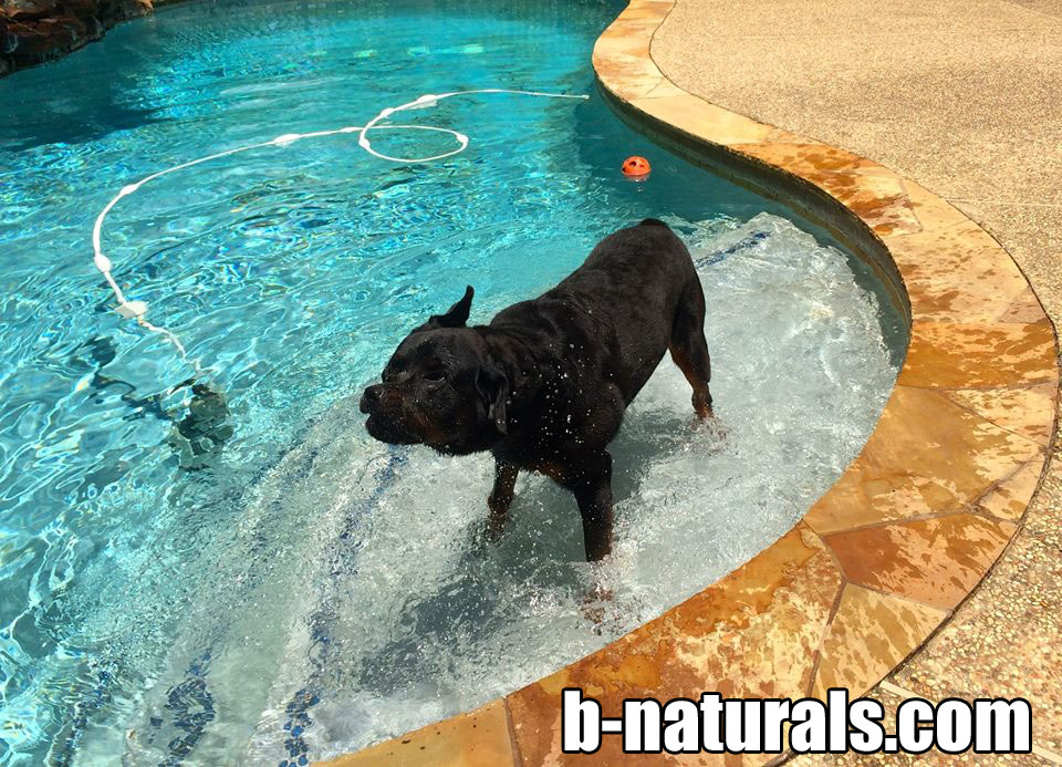 B-Naturals.com Dog Supplements
