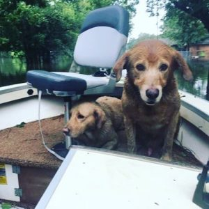 Hurricane Harvey Dog Rescue